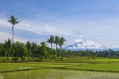 Ασιατικό τοπίο τομέων ρυζιού στην Ινδονησία Στοκ εικόνες με δικαίωμα ελεύθερης χρήσης