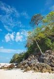 Ασιατικό τοπίο Beautoful ενός τροπικού δάσους και ενός ωκεανού Στοκ φωτογραφίες με δικαίωμα ελεύθερης χρήσης