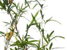 Ασιατικό φυσικό υπόβαθρο με το μπαμπού στοκ φωτογραφία