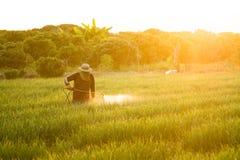 Ασιατικό ψεκάζοντας φυτοφάρμακο αγροτών στις εγκαταστάσεις συγκομιδών στο αγρόκτημα στοκ εικόνες