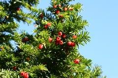 δασικά δέντρα Στοκ Εικόνα