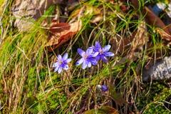 δασική άνοιξη λουλουδ&iota Στοκ Φωτογραφίες