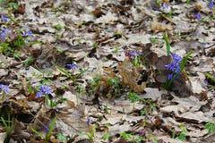 δασική άνοιξη λουλουδ&iota Στοκ φωτογραφίες με δικαίωμα ελεύθερης χρήσης