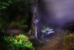 δασική μαγική νύχτα Στοκ Φωτογραφία