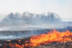 Δασική πυρκαγιά Στοκ εικόνες με δικαίωμα ελεύθερης χρήσης
