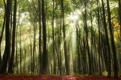 δασικός ήλιος ακτίνων Στοκ Φωτογραφίες