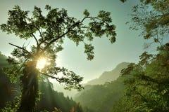 δασικός ελαφρύς ήλιος Στοκ φωτογραφία με δικαίωμα ελεύθερης χρήσης