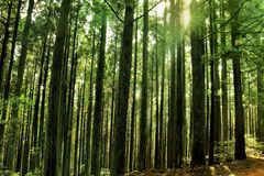 δασικός ελαφρύς ήλιος Στοκ εικόνα με δικαίωμα ελεύθερης χρήσης