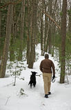 δασικός περίπατος σκυλ&i Στοκ εικόνα με δικαίωμα ελεύθερης χρήσης