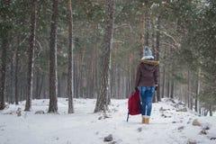 δασικός περίπατος Στοκ εικόνες με δικαίωμα ελεύθερης χρήσης