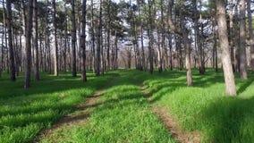 δασικός πράσινος δρόμος απόθεμα βίντεο