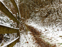 δασικός δρόμος χιονώδης Στοκ φωτογραφία με δικαίωμα ελεύθερης χρήσης