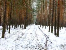 δασικός δρόμος χιονώδης Στοκ Φωτογραφίες