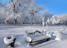 δασικός χειμώνας ήλιων φύσης στοκ εικόνα με δικαίωμα ελεύθερης χρήσης