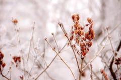 δασικός χειμώνας ήλιων φύσης Στοκ Εικόνα