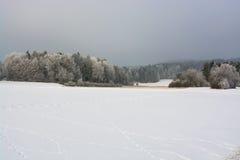 δασικός χειμώνας ήλιων φύσης Στοκ φωτογραφία με δικαίωμα ελεύθερης χρήσης