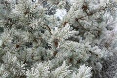 δασικός χειμώνας ήλιων φύσης Στοκ Εικόνες