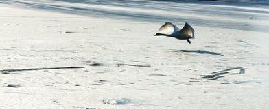 δασικός χειμώνας ήλιων φύσης Στοκ Φωτογραφία