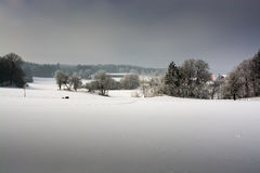 δασικός χειμώνας ήλιων φύσης Στοκ φωτογραφίες με δικαίωμα ελεύθερης χρήσης