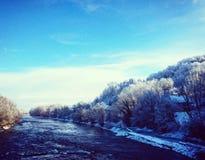 δασικός χειμώνας ήλιων φύσης Στοκ Φωτογραφίες