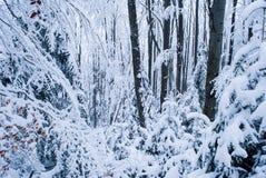 δασικός χειμώνας ιστορίας χιονιού νεράιδων Στοκ Φωτογραφίες