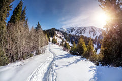 δασικός χιονώδης χειμώνας ουρανού τοπίου βουνών συννεφιάζω Στοκ φωτογραφία με δικαίωμα ελεύθερης χρήσης