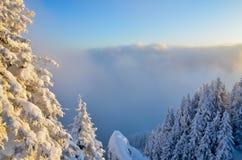 δασικός χιονώδης χειμώνας Στοκ εικόνες με δικαίωμα ελεύθερης χρήσης
