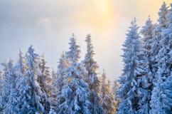 δασικός χιονώδης χειμώνας Στοκ Φωτογραφία