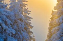 δασικός χιονώδης χειμώνας Στοκ Εικόνα