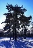 δασικός χιονώδης χειμώνας Στοκ φωτογραφίες με δικαίωμα ελεύθερης χρήσης