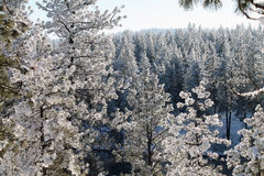 δασικός χιονώδης χειμώνας Στοκ Εικόνες