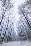 δασικός χιονώδης χειμώνας Στοκ εικόνα με δικαίωμα ελεύθερης χρήσης