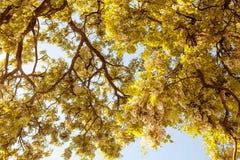 δασικό δάσος δέντρων χιονιού φύσης ανασκοπήσεων Πράσινες ξύλινες ανασκοπήσεις φωτός του ήλιου φύσης Στοκ εικόνα με δικαίωμα ελεύθερης χρήσης