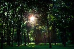 δασικό δάσος δέντρων χιονιού φύσης ανασκοπήσεων Στοκ Φωτογραφία
