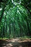 δασικό δάσος δέντρων χιονιού φύσης ανασκοπήσεων Στοκ εικόνες με δικαίωμα ελεύθερης χρήσης