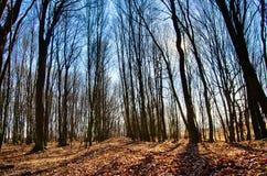 δασικό δάσος δέντρων χιονιού φύσης ανασκοπήσεων Στοκ φωτογραφία με δικαίωμα ελεύθερης χρήσης