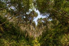 δασικό δάσος δέντρων χιονιού φύσης ανασκοπήσεων Στοκ Φωτογραφίες