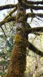 δασικό δέντρο διαβάσεων φύσης Στοκ Εικόνες