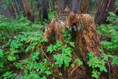 δασικό δέντρο κολοβωμάτων μανιταριών πρασινάδων στοκ εικόνα με δικαίωμα ελεύθερης χρήσης