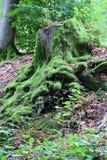 δασικό δέντρο κολοβωμάτων μανιταριών πρασινάδων Στοκ φωτογραφίες με δικαίωμα ελεύθερης χρήσης