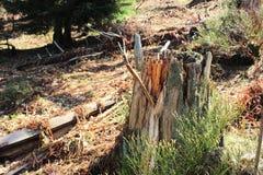 δασικό δέντρο κολοβωμάτων μανιταριών πρασινάδων στοκ εικόνες με δικαίωμα ελεύθερης χρήσης