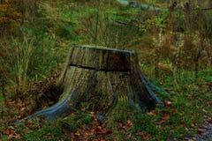 δασικό δέντρο κολοβωμάτων μανιταριών πρασινάδων στοκ εικόνα
