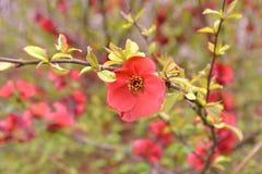 δασικό λευκό άνοιξη λουλουδιών Στοκ εικόνες με δικαίωμα ελεύθερης χρήσης