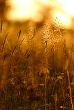 δασικό λευκό άνοιξη λουλουδιών Στοκ Εικόνες
