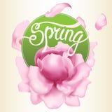 δασικό λευκό άνοιξη λουλουδιών ελεύθερη απεικόνιση δικαιώματος