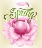 δασικό λευκό άνοιξη λουλουδιών διανυσματική απεικόνιση