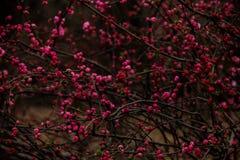 δασικό λευκό άνοιξη λουλουδιών Στοκ Εικόνα