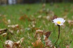 δασικό λευκό άνοιξη λουλουδιών Στοκ φωτογραφίες με δικαίωμα ελεύθερης χρήσης