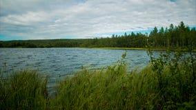 δασικό καλοκαίρι αντανάκλασης λιμνών ομορφιάς Χρονικές περιτυλίξεις φιλμ μικρού μήκους