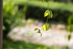 δασικό κορυφαίο δέντρο πεύκων Στοκ φωτογραφία με δικαίωμα ελεύθερης χρήσης